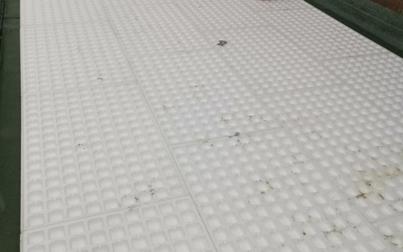 Dachbegrünung